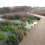 Boardwalk into the wetland area.